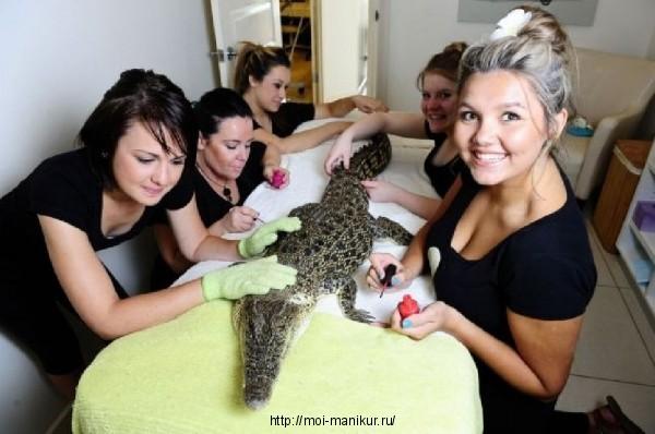 Маникюр для крокодила в салоне красоты для животных.