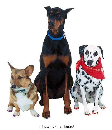 Маникюр собаке: методы и технологии создания.