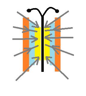 как рисовать бабочку на ногтях - схема